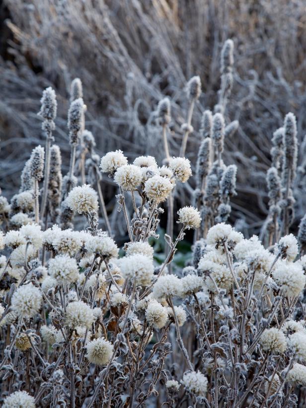 RX-DK-LG05801_frosty-garden_s3x4.jpg.rend.hgtvcom.616.822